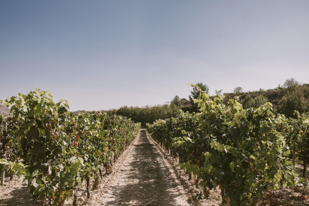vinos balmaseda